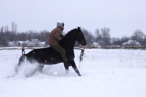 cavaleiro em um cavalo sem sela um na neve