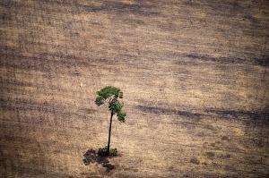 20141019 Amazonia
